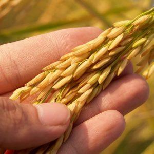 Grains / Flours